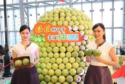 新北文旦柚上市