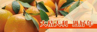 八里柑橘 新鮮上市