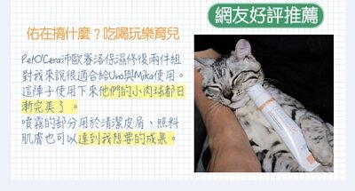 cat-blog02