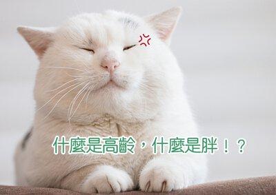 Blog-cat 02