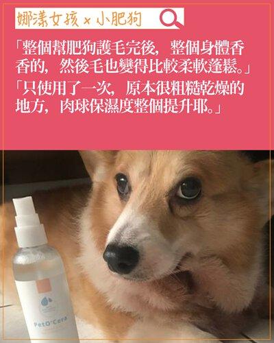 experience-dog03