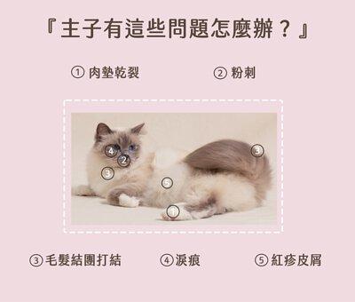 PetO'cera Cat 02