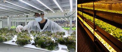 植物工廠輸出