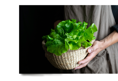 樂鮮良房-無毒水耕蔬菜