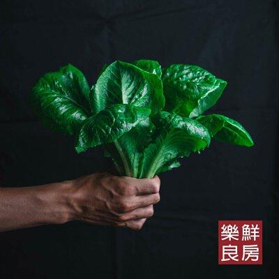 綠蘿蔓生菜