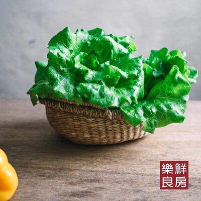 奶油萵苣-樂鮮良房無毒水耕蔬菜