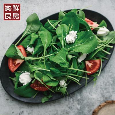 圓葉芝麻葉-樂鮮良房無毒水耕蔬菜