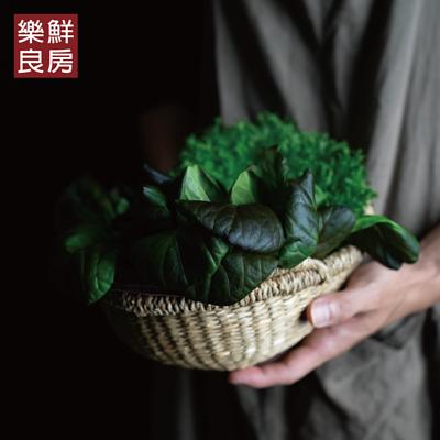 蔬菜箱推薦懶人福音!無毒水耕鮮蔬直上餐桌,吃出「蔬菜力」