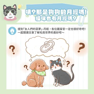那是狗狗的月經嗎?那貓咪也有月經嗎?