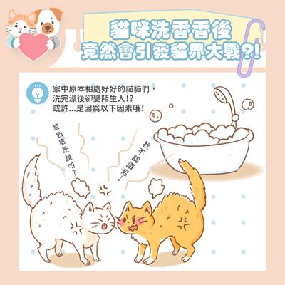 貓咪洗澡後,竟然引發貓界大戰啦!!