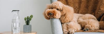 寵物舒服的躺臥在放在沙發上的寵物萬用墊