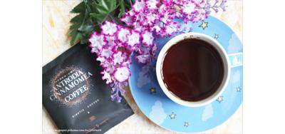 牛樟芝子實體咖啡