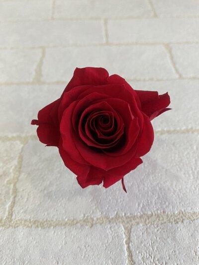 什麼是不凋花什麼是永生花不凋玫瑰花永生玫瑰花