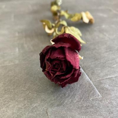 小薇花藝天然乾燥花玫瑰乾燥花乾燥花推薦