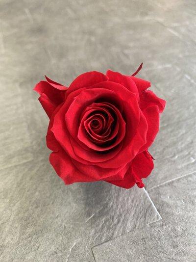 紅色永生玫瑰花就是紅色不凋玫瑰花