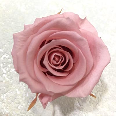 粉色永生玫瑰花就是粉色不凋玫瑰花