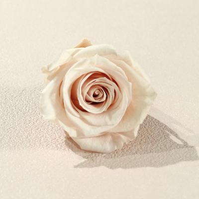 奶茶杏色永生玫瑰花就是奶茶杏色不凋玫瑰花
