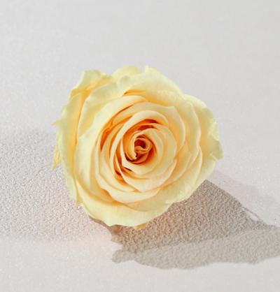 香檳橙色永生玫瑰花就是香檳橙色不凋玫瑰花