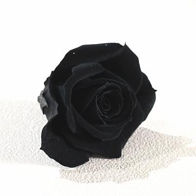 黑色永生玫瑰花就是黑色不凋玫瑰花