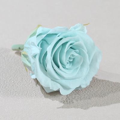 藍色永生玫瑰花就是藍色不凋玫瑰花