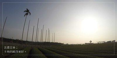 茶園位置,安住山茶園,茶園實景,茶樹,茶人,產地,苦盡甘來,甘霖