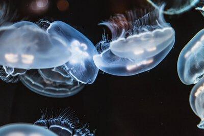 1片蜂蠟保鮮布 一般使用能維持1年以上的時間, 能減少約66m²的保鮮膜用量, 可分解的天然材質,不讓地球窒息, 不變塑膠水母,不危害海洋生物。
