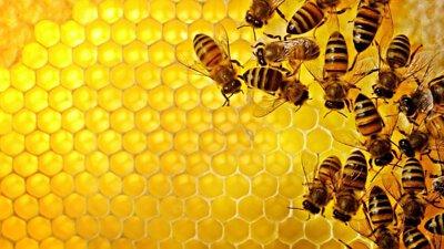 蜂蠟天然可食,為蜜蜂保存食物的介質, 相較保鮮膜單純阻隔空氣, 擁有良好的抗菌性與保濕度。 能更好地保鮮食材與食物。