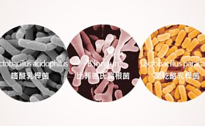 如果挑選益生菌
