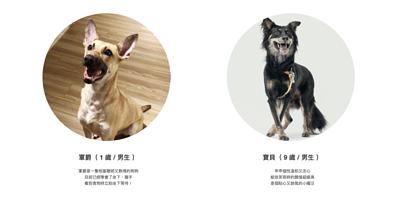 spca台灣防止虐待動物協會x PettoFund-讓愛回家專案,軍爵待認養,真的親人忠心非常聰明