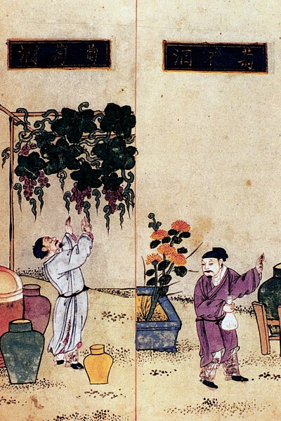 grapes cultivated in  ancient China
