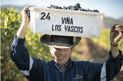 grape harvester delightedly picked grapes in the Los Vascos vineyard (Photos by DBR Lafite)