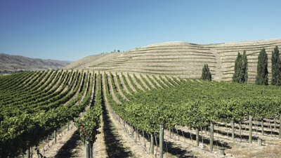 Domaine Thomson's vineyard in New Zealand, Central Otago
