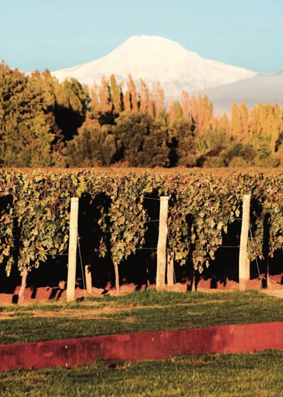the Malbec vineyards, which are located at 1,100 metres above sea level