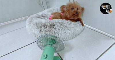 狗狗天生毛絨絨超怕熱,靜音又可愛的小古空氣循環扇照顧每個毛孩