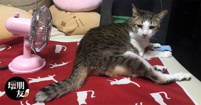 若擔心家裡對聲音敏感的貓貓怕熱,給他一台小古復古風扇準沒錯