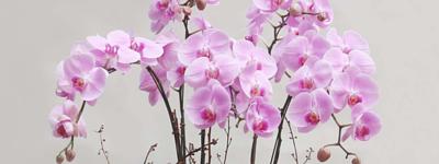 蝴蝶蘭花盆栽花意空間