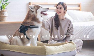 LIFEAPP寵物緩壓睡墊