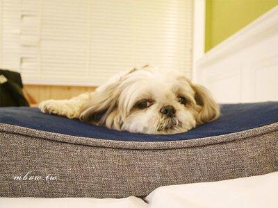 「寵物床墊推薦」Lifeapp舒弧墊 最符合狗體工學的寵物睡墊,布套及床體皆可拆洗,給毛孩一個乾淨舒適的睡眠環境