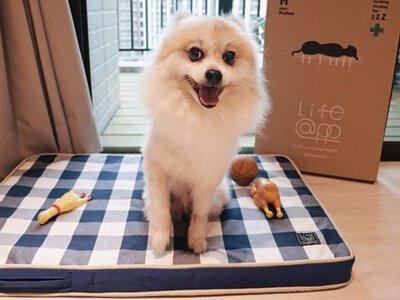 [寵物用品] 生活提案 X Lifeapp寵物緩壓睡墊 ∥毛孩床墊推薦4D彈力釋壓超透氣
