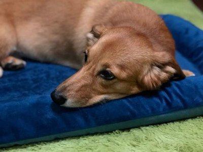 開箱 寵物床推薦--Lifeapp 狗窩寵物墊