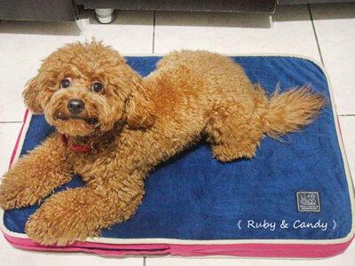 【Lifeapp寵物睡墊】CP值爆表_台灣導盲犬推薦使用_4D高涵氧纖維_保護寵物