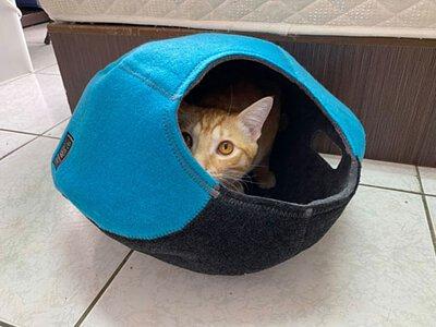 超好用 Lifeapp貓屋 貓碗 給貓主子們一個溫暖的專屬小窩吧!!