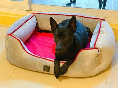 狗狗別焦慮!一個讓毛寶貝安心的窩 lifeapp 尊爵堡 寵物床墊