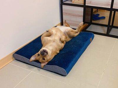 Lifeapp 舒弧墊 小黑不用DIY 超舒服 狗體工學床 寵物床 狗床 開箱