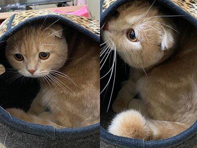 布南達與斗笠貓