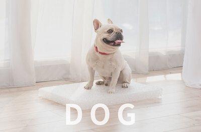 LIFEAPP汪星人-狗狗寵物用品