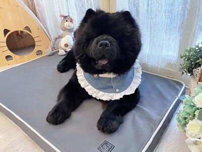 ChowChow熊熊--LIFEAPP經典透氣睡墊