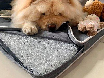 Chowchow鬆獅犬珍奶-LIFEAPP經典透氣睡墊