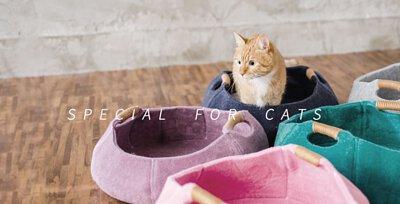LIFEAPP CAT