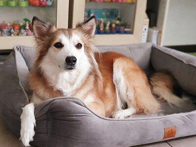 米克斯驚喜包之偷家八寶粥 - LIFEAPP寵物緩壓睡墊